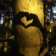 Meditation i skoven