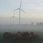 Køer på græs, natur